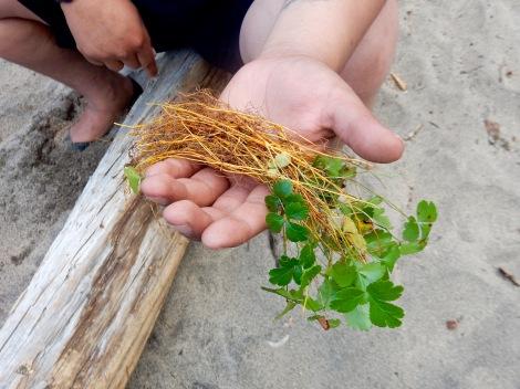Une petite plante medicinale.jpg
